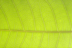 Pattern of growing leaf surface Stock Photo