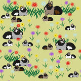 Pattern of guinea pigs and colors. Illustrations Royalty Free Stock Photo