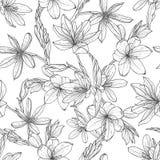 Pattern with hand drawn illustrations of Schizostylis royalty free illustration