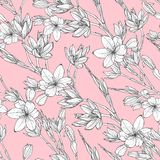 Pattern with hand drawn illustrations of Schizostylis vector illustration