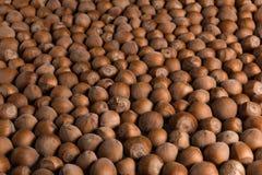 Pattern of hazelnuts royalty free stock photography