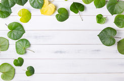 Pattern Heart Shaped Green Leaf On White Wood Background Royalty Free Stock Image