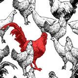 Pattern with hens and red cock. Seamless pattern with hen and red cock. Vector illustration in vintage engraved style on white background Royalty Free Stock Photos