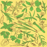 Pattern with herbs Royalty Free Stock Photography