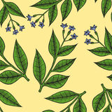 Pattern herbs and flowers Royalty Free Stock Images