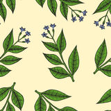 Pattern herbs and flowers Stock Images
