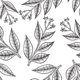 Pattern herbs and flowers Stock Image