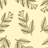 Pattern herbs and flowers Stock Photos