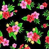 Pattern of Hibiscus Royalty Free Stock Images