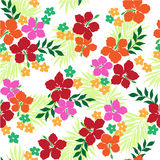 Pattern of the Hibiscus. I drew Hibiscus for a design Royalty Free Stock Photos