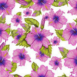 Pattern of hibiscus Royalty Free Stock Photos