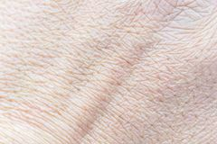 Pattern of human skin with cells and lines texture. stock photos