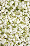 Pattern of Jasmine Flower. Full of Jasmine Flower as background, with green leaves and white flowers Royalty Free Stock Photo