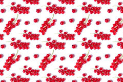 Pattern juicy red ripe currant Stock Photos
