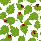 Pattern with  ladybug and green leaves Stock Images
