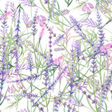 Pattern with lavender Royalty Free Stock Images