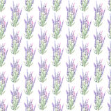 Pattern with lavender. Floral pattern with lavender painted with watercolors on a white background Royalty Free Stock Image