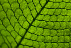 Pattern leaf Royalty Free Stock Image