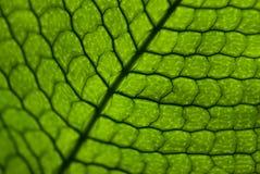 Pattern leaf Royalty Free Stock Image