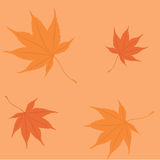 Pattern leaf autumn Royalty Free Stock Photo