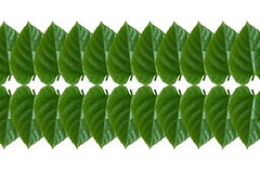 Pattern  from leaf Royalty Free Stock Images