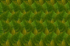 Pattern  from leaf Stock Photography