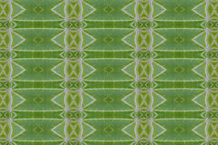 Pattern  from leaf Royalty Free Stock Photo