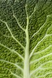 The pattern of a leaf of a Savoy cabbage Stock Photography