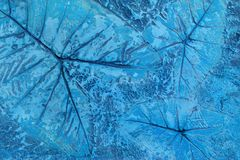 Pattern of leaf stamped on blue pastel concrete pavement for decorate walkways in the garden stock photo