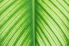 Pattern of leaf from tree Stock Photos