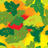 Pattern from the leaves of tropical trees Royalty Free Stock Images