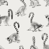 Pattern of the lemurs Stock Photo