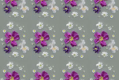 Pattern - lilac and white spring flowers Royalty Free Stock Photos