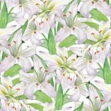 Pattern with lilies 1. Seamless background. Pattern with lilies. Floral seamless watercolor background with white flowers Royalty Free Stock Photography
