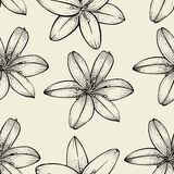 Pattern of Lily flowers Stock Images