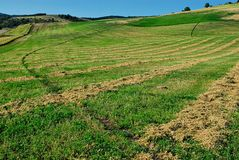 A pattern of lines in a green field in Northern Utah. Alternating green and brown lines created from mowers or other vehicles working the fields Royalty Free Stock Photos