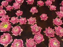 Pattern lotus floating water surface. Pattern pink lotus floating water surface Royalty Free Stock Photos