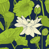 Pattern with lotus. Seamless pattern with lotus, hand draw  illustration Stock Images