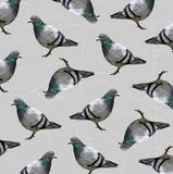 Pattern of Low poly pigeon bird on gray back ground,animal geometric concept,Abstract vector. Pattern of Low poly pigeon bird on gray back ground,animal stock illustration