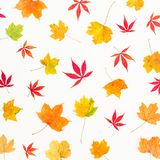 Pattern made of autumn yellow and red leaves on white background. Flat lay, top view. Royalty Free Stock Photo