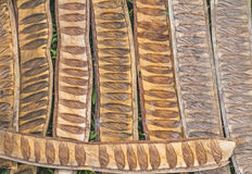 Pattern made from dried  Caesalpinia pulcherrima sheath tree use Royalty Free Stock Photography