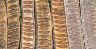 Pattern made from dried  Caesalpinia pulcherrima sheath tree use Stock Image