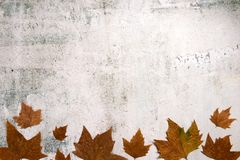 Free Pattern Made Of Red And Yellow Fall Leaves On Concrete Background, Autumn Concept Royalty Free Stock Image - 157942426