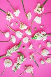 Pattern made of white flowers on pink background. Flat lay, top view. Floral background. Flowers pattern texture Stock Image