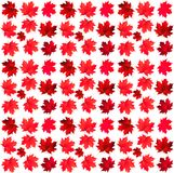 Pattern of maple leaves Royalty Free Stock Photos