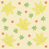 Pattern of maple leaves Stock Image