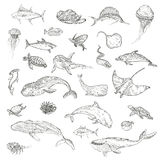 The pattern of marine animals. Royalty Free Stock Image