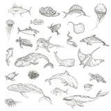 The pattern of marine animals. Royalty Free Stock Image