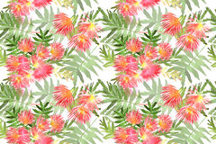 Pattern Mimosa Albizia julibrissin foliage and flowers Royalty Free Stock Images
