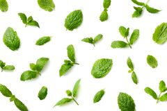 Pattern of mint leaves stock images